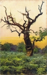 Ak Beauty Spots of England, Old Oak, Richmond Park